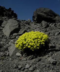 Flowers_in_barren_land_sm